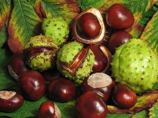 walk arrival chestnut recipes
